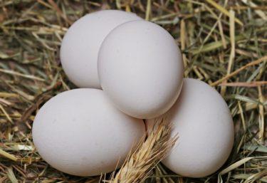 【3秒でできる】生卵1つであなたのフットワークの軽さを判断する方法とは!?